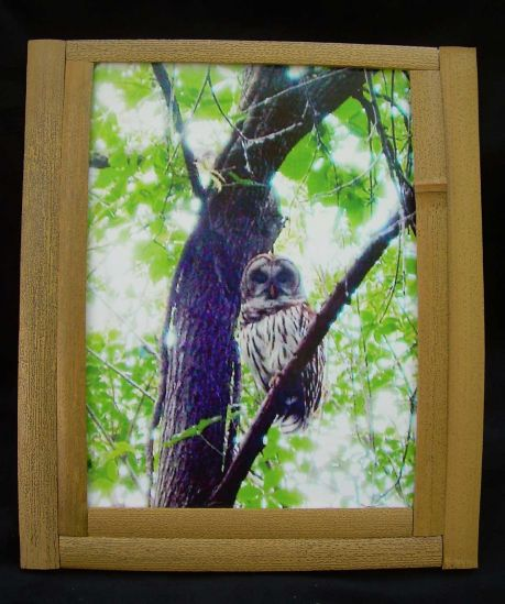 Owl in bamboo picture frame bamboo arts and crafts gallery for Bamboo arts and crafts