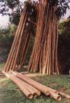 Bamboo_-_Tambobo_Colection.jpg